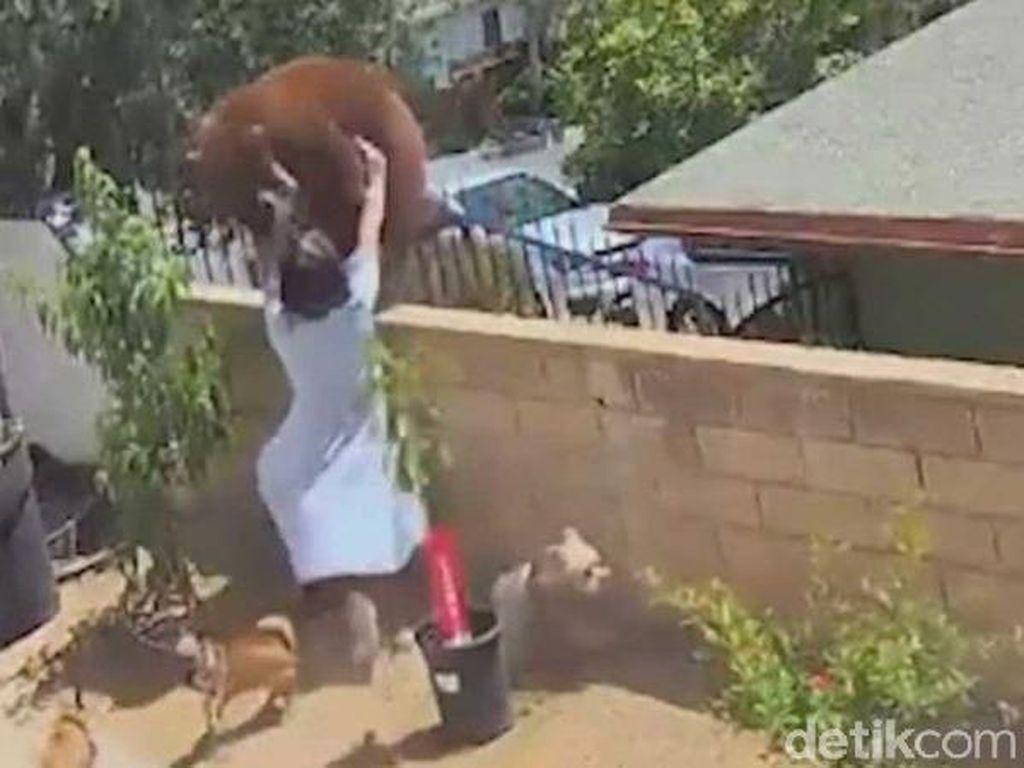 Heroik! Gadis 17 Tahun Dorong Beruang Demi Selamatkan Anjingnya
