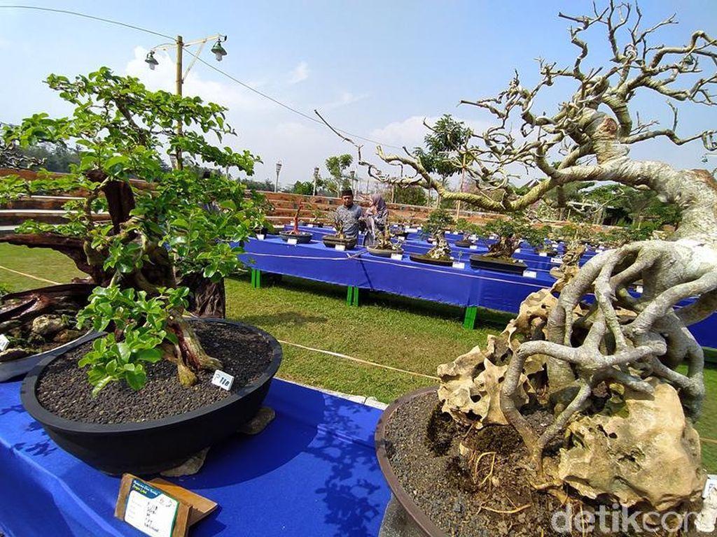 Ini Pameran Bonsai Pertama di Magelang, Dikemas Jadi Kegiatan Wisata