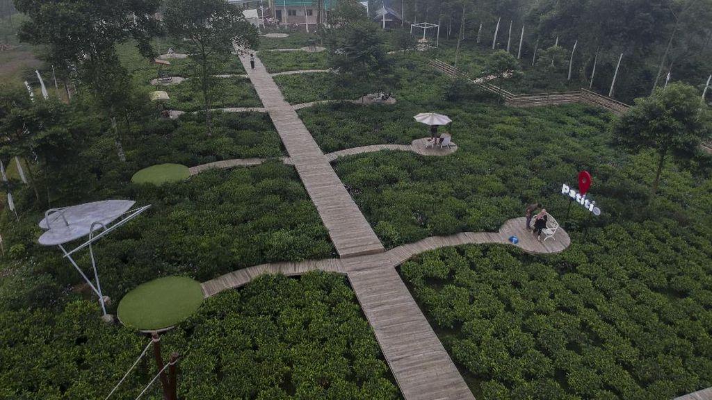 Wisata Kebun Teh Ini Ada di Batang Lho Gaes