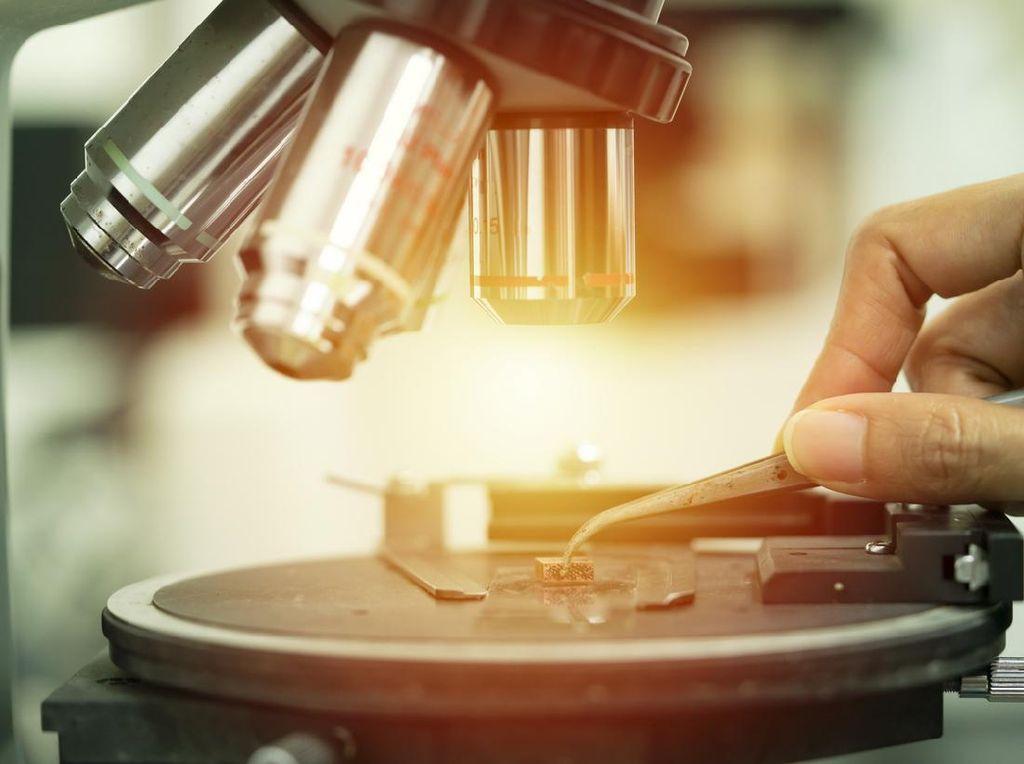 Pandemi COVID-19 Nggak Habis-habis, 2 Varian Virus Flu Terancam Punah