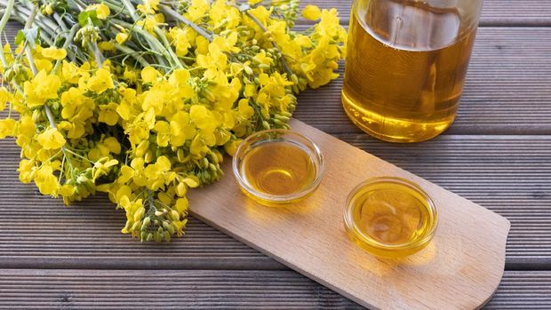 bottle and cups with rapeseed oil, next to young rapeseed flowers on a wooden table