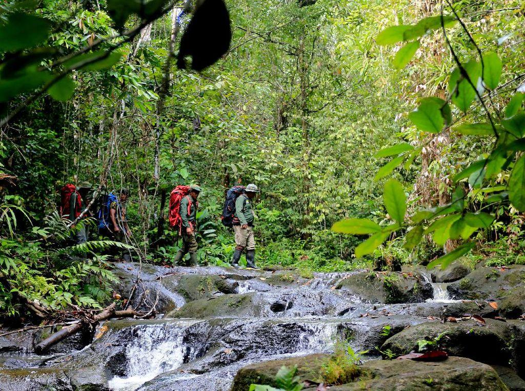 Kerja Keras Para Jagawana Hutan Leuser
