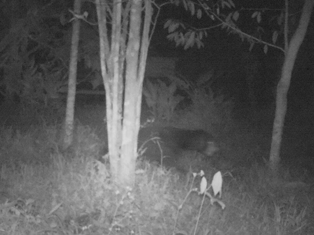 2 Makhluk Misterius Bikin Geger Warga Ternyata Binatang Langka