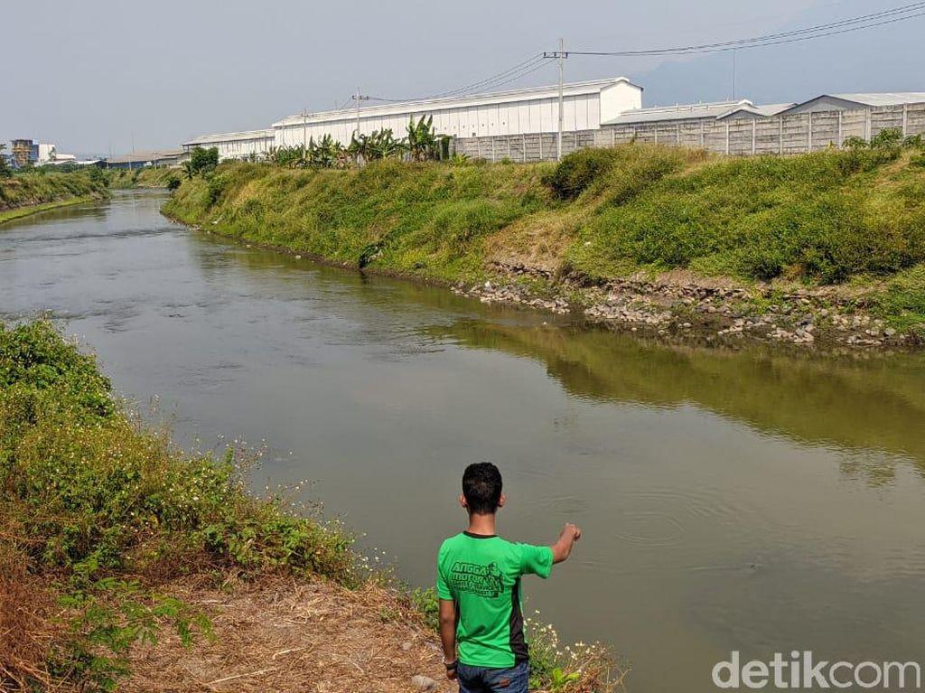 Buaya yang Muncul di Sungai Sadar Mojokerto Tak Perlu Dievakuasi