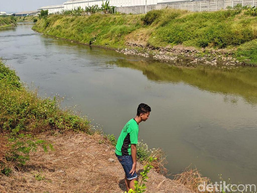 Ada Sayembara Tangkap Buaya di Sungai Sadar Mojokerto, Ini Faktanya