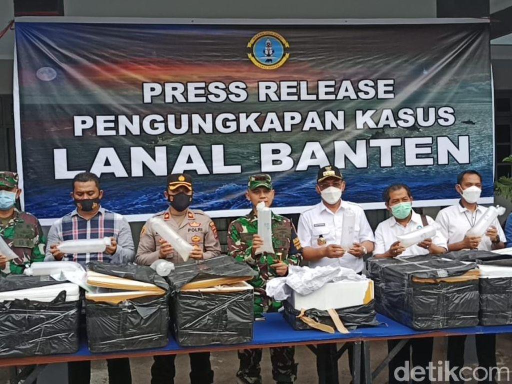 Penyelundupan Benur Senilai Rp 7,8 M ke Vietnam Digagalkan TNI AL