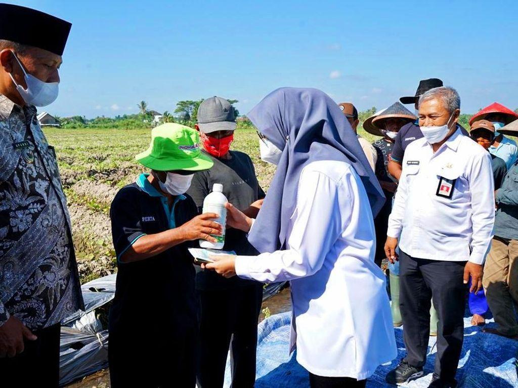 Banyuwangi Luncurkan Layanan Konsultasi Online ke Petani