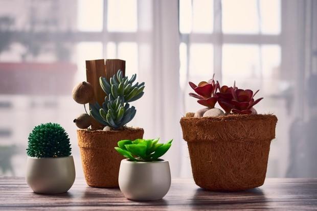 plants (sumber : freepik)