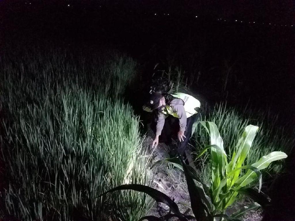 Petani Lamongan Tewas Tersetrum Jebakan Tikus yang Dipasang Sendiri