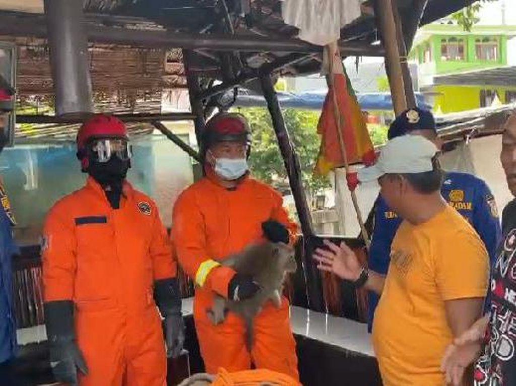 Monyet Berkeliaran di Jakbar Bikin Resah, Sempat Masuk Dapur Warga