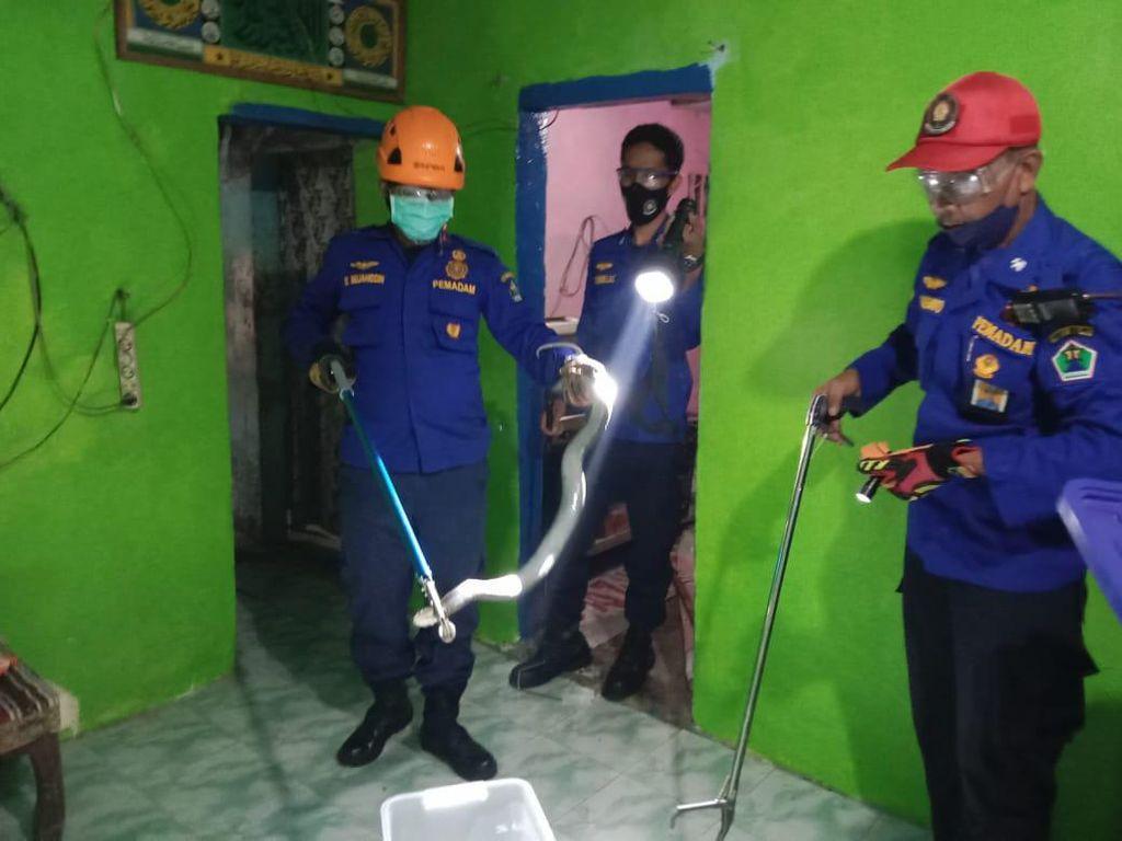 2 Warga Kota Malang Disembur Ular Kobra