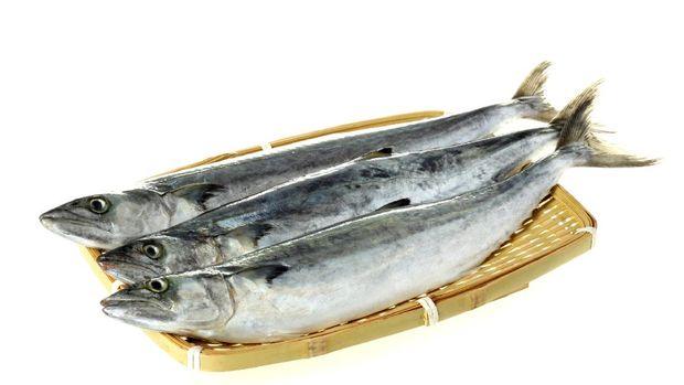 Spanish mackerel isolated on white background