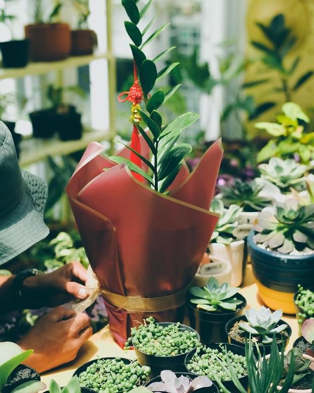 Bagi yang suka dengan alam dan pecinta tanaman, hadiah berupa tanaman hias akan sangat pas kamu berikan.
