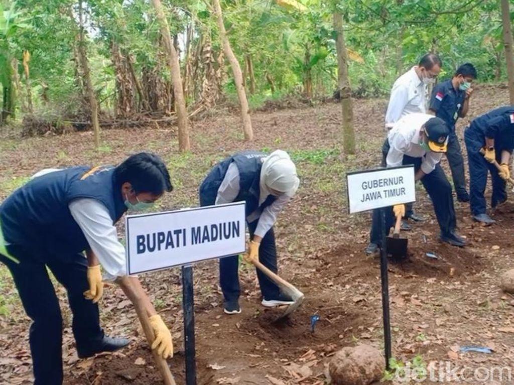 Panen Raya Porang di Madiun, Gubernur Jatim Siapkan SK Larangan Ekspor Bibit