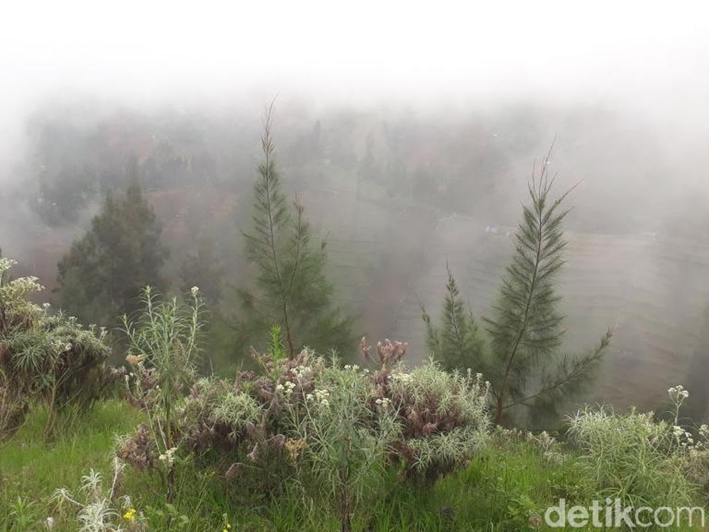 Foto: Kebun Bunga Abadi dari Bromo Tengger Semeru