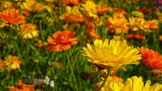 Marigold/pixabay.com