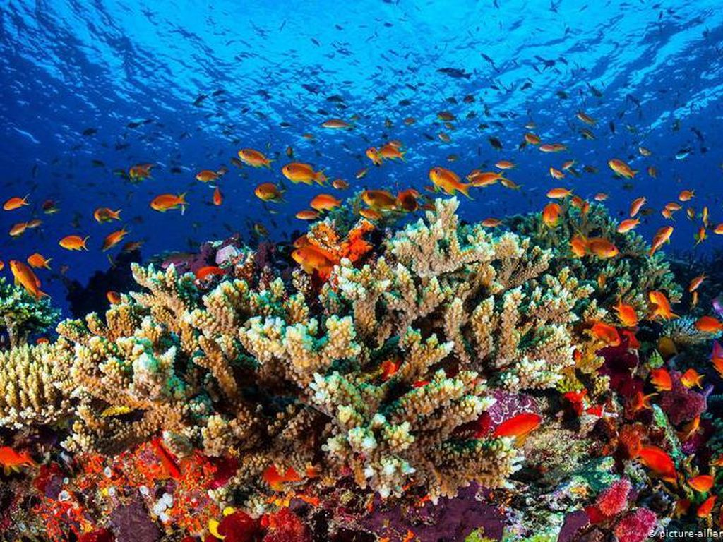 UNESCO Beberkan Alasan Cabut Status Warisan Dunia, Berat Sih tapi...