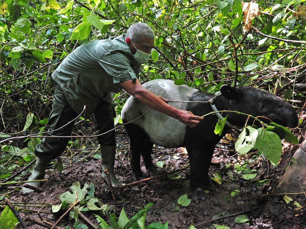 Momen Pelepasliaran Satwa di Taman Nasional Kerinci Seblat