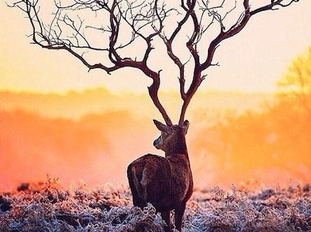 Tes Kepribadian: Gambar Pohon atau Rusa yang Pertama Kamu Lihat?