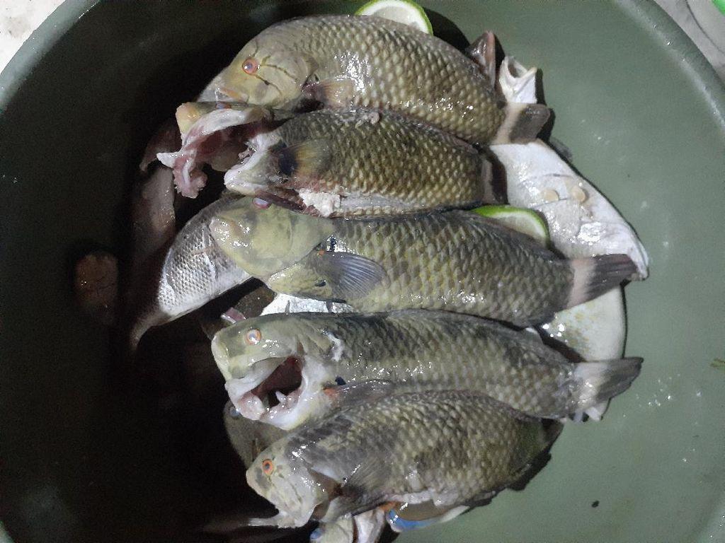 Satu Lagi Hewan Unik dari Timur Indonesia, Ikan Pasir!