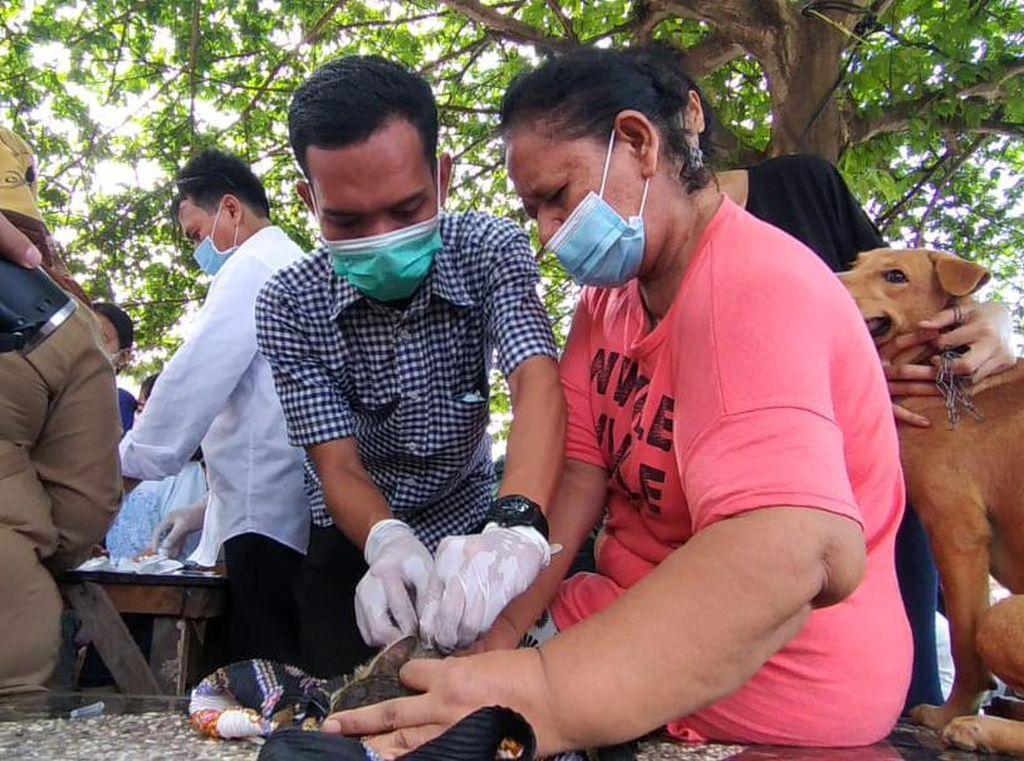 Bocah Tewas Digigit Anjing, Ratusan Peliharaan Warga di Medan Divaksin Rabies
