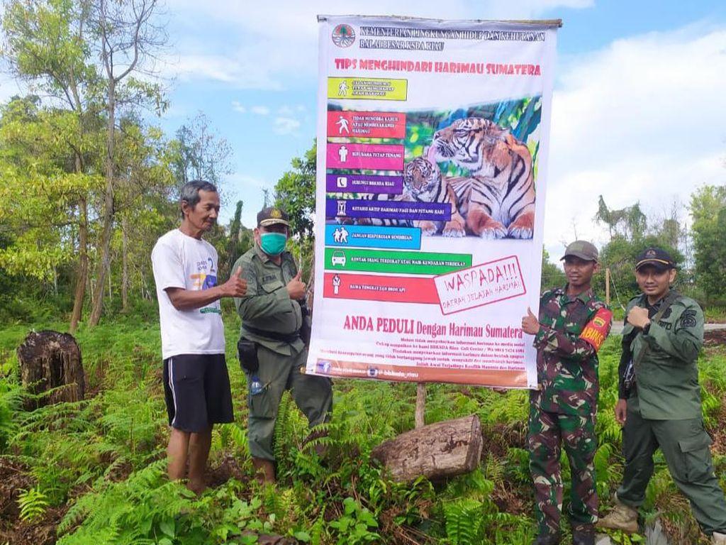 Harimau Muncul di Dekat Permukiman Warga Siak, BKSDA Pasang Camera Trap
