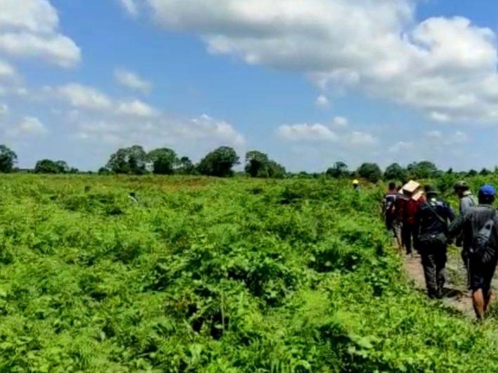 Pekerja di Riau Tewas Diterkam, Ini Tip Hindari Serangan Harimau