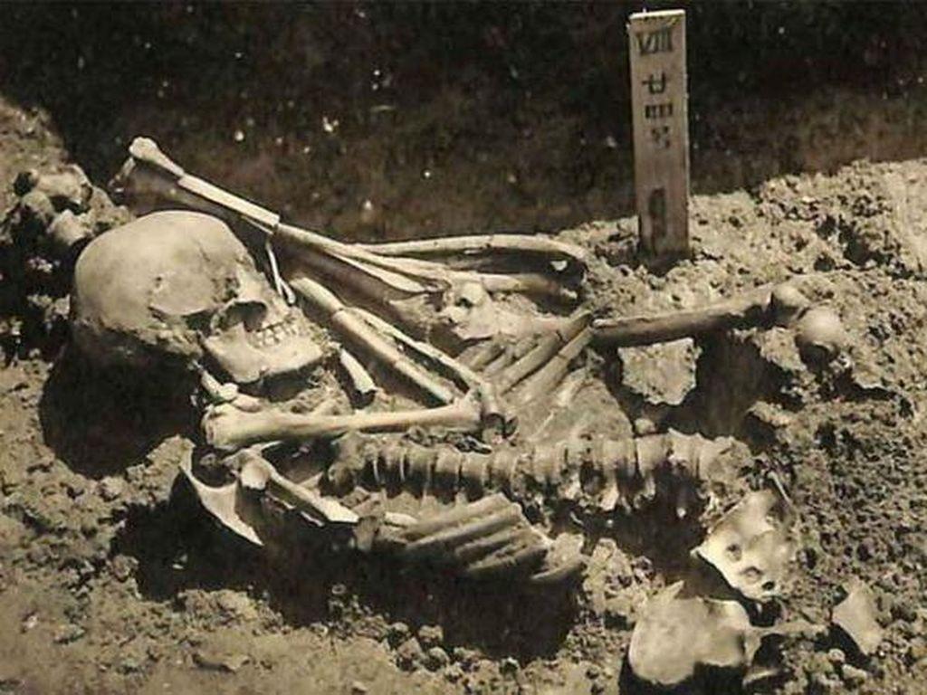 Ini Korban Serangan Hiu Tertua, Usianya 3.000 Tahun