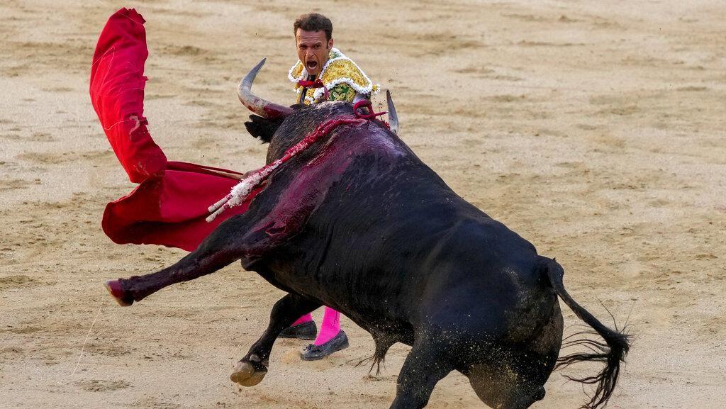 Awas Diseruduk, Yuk Lihat Pertunjukan Adu Banteng di Negeri Matador