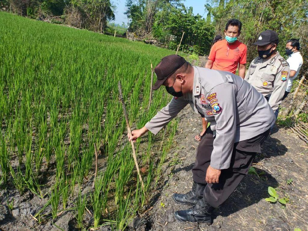 Petani di Jombang Tewas Tersetrum Jebakan Tikus Listrik Miliknya