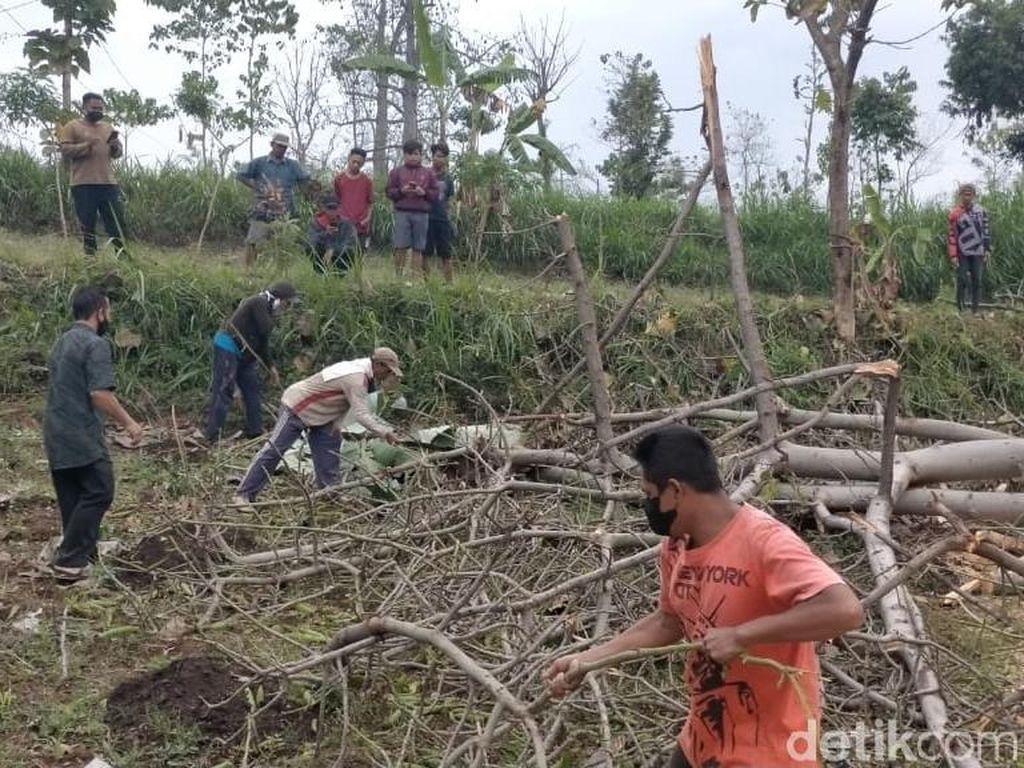 Penebang Pohon di Probolinggo Tewas Tertimpa Dahan Randu