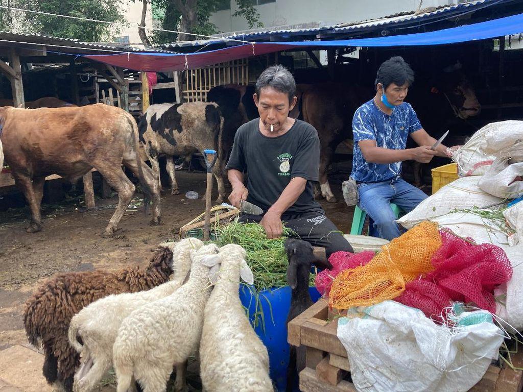 H-10 Idul Adha, Begini Suasana di Pasar Kambing Tanah Abang