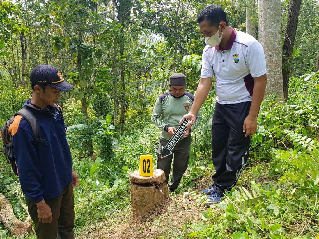 Berawal dari Kecelakaan, Kasus Illegal Logging di Trenggalek Terbongkar