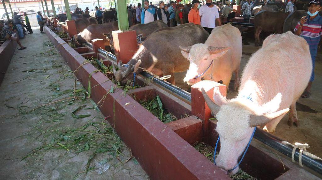 Pasar Ternak Kudus Ramai di Tengah PPKM Darurat