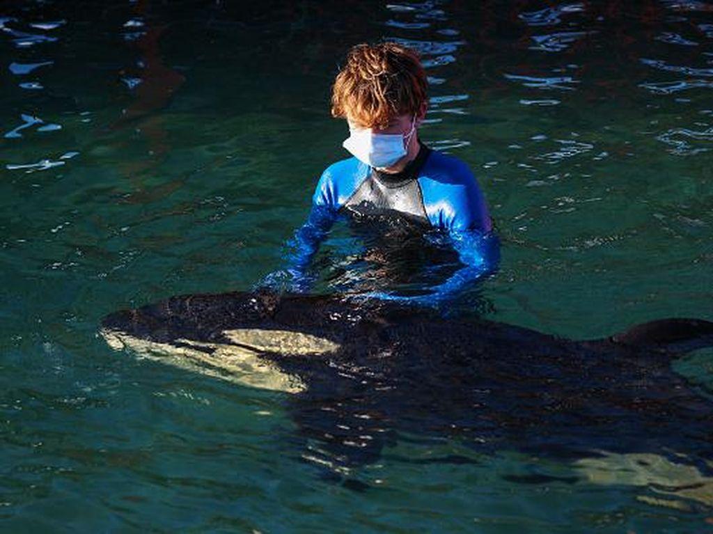 Bayi Orca Mati dalam Proses Mencari Induknya yang Hilang
