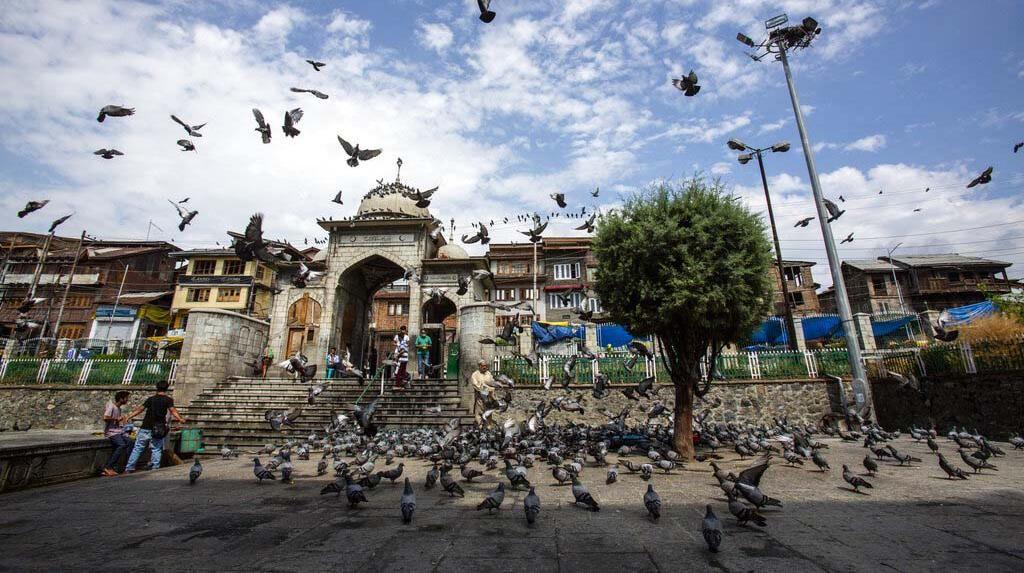 Memberi Makan Ratusan Merpati di Masjid Muslim Kashmir