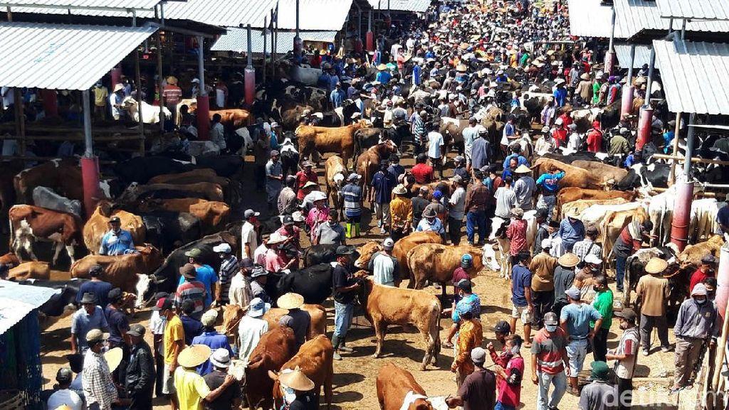 Jelang Idul Adha, Pasar Sapi di Boyolali Ramai