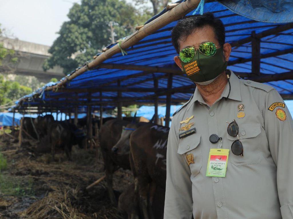 Cek Stok Hewan Kurban di Bogor, Mentan: Harga Terkendali, Kondisi Cukup