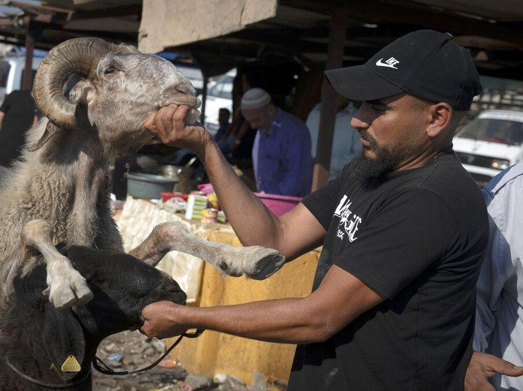 Sibuknya Warga Palestina Berburu Hewan Kurban