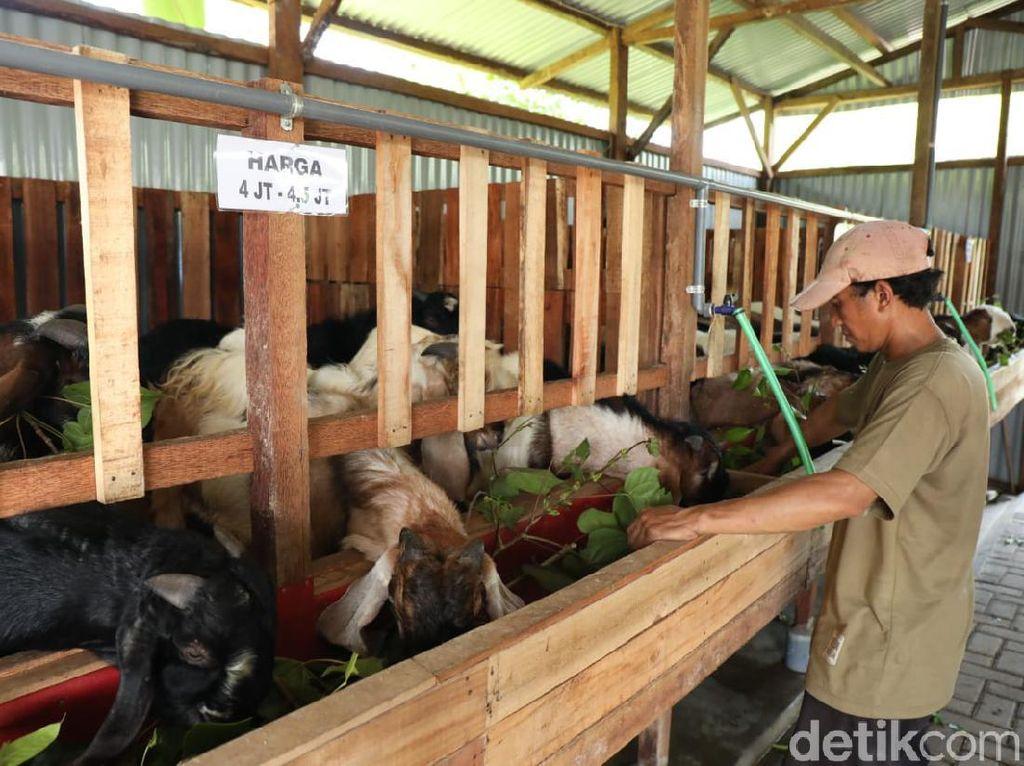 Minimarket Hewan Kurban Ini Beromzet Ratusan Juta di Tengah Pandemi COVID-19
