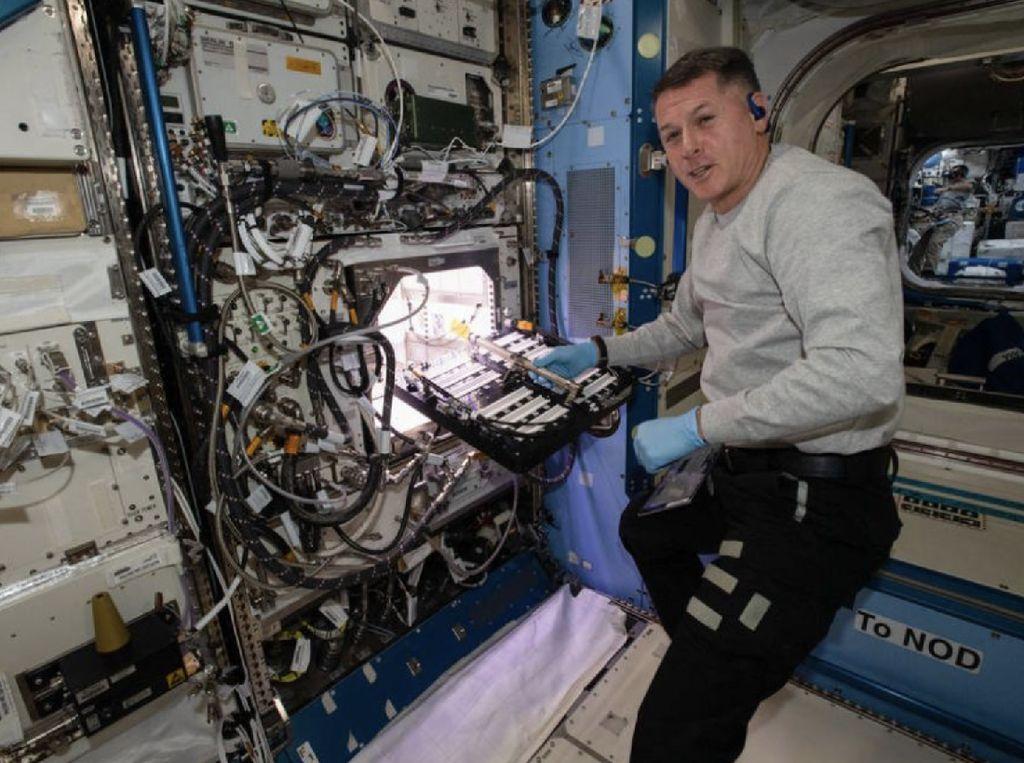Mantap! Astronaut Cocok Tanam Cabai Rasa Luar Angkasa