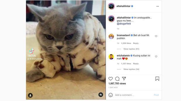 Kucing Atta Aurel