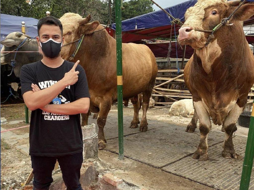 Kurban 40 Hewan, Raffi Ahmad Hadiahkan Sapi untuk Nakes