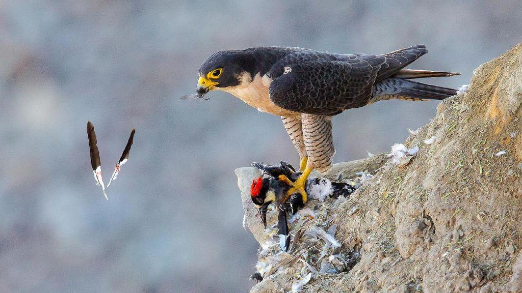 Karya Juara Kontes Foto Burung yang Bikin Mata Terperangah