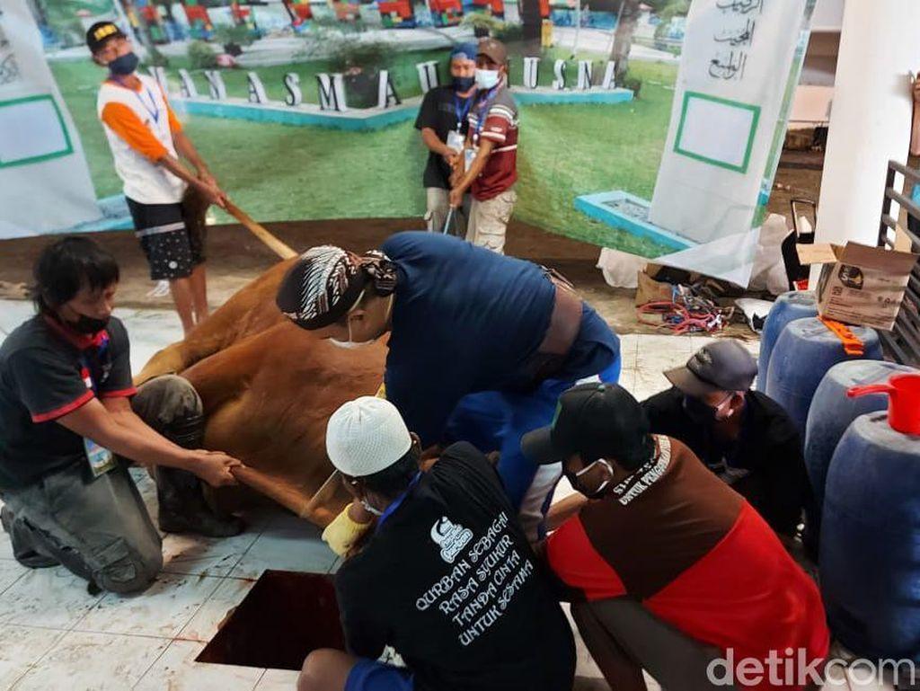 Sapi Presiden Jokowi Disembelih, Dagingnya Dibagi ke Petugas Makam COVID-19