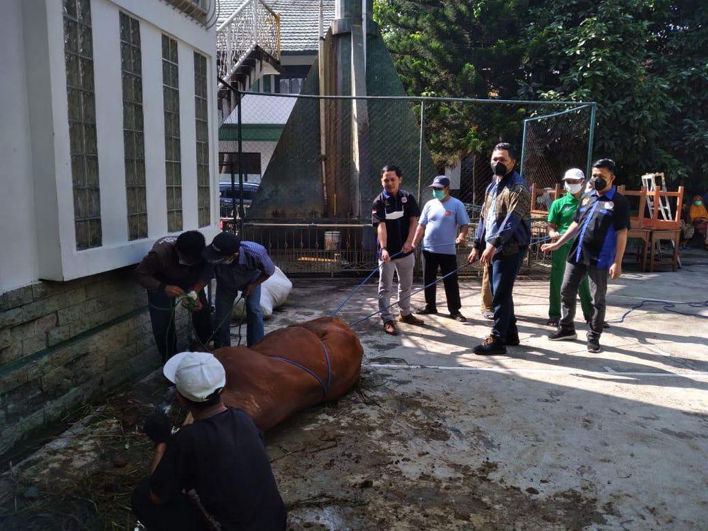Peringati Idul Adha, Garda Pemuda NasDem Jabar Bagikan Hewan Kurban