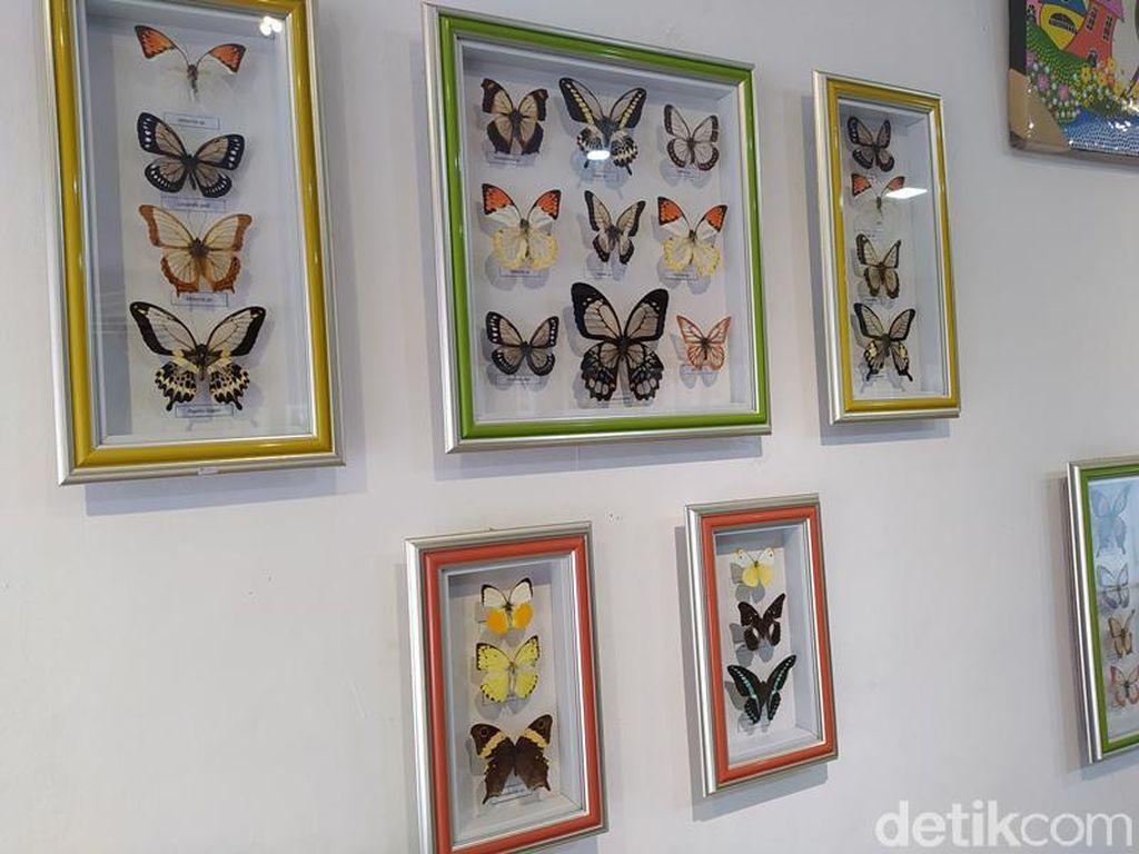 Ada Lho Penangkaran Kupu-kupu di Dekat Candi Borobudur