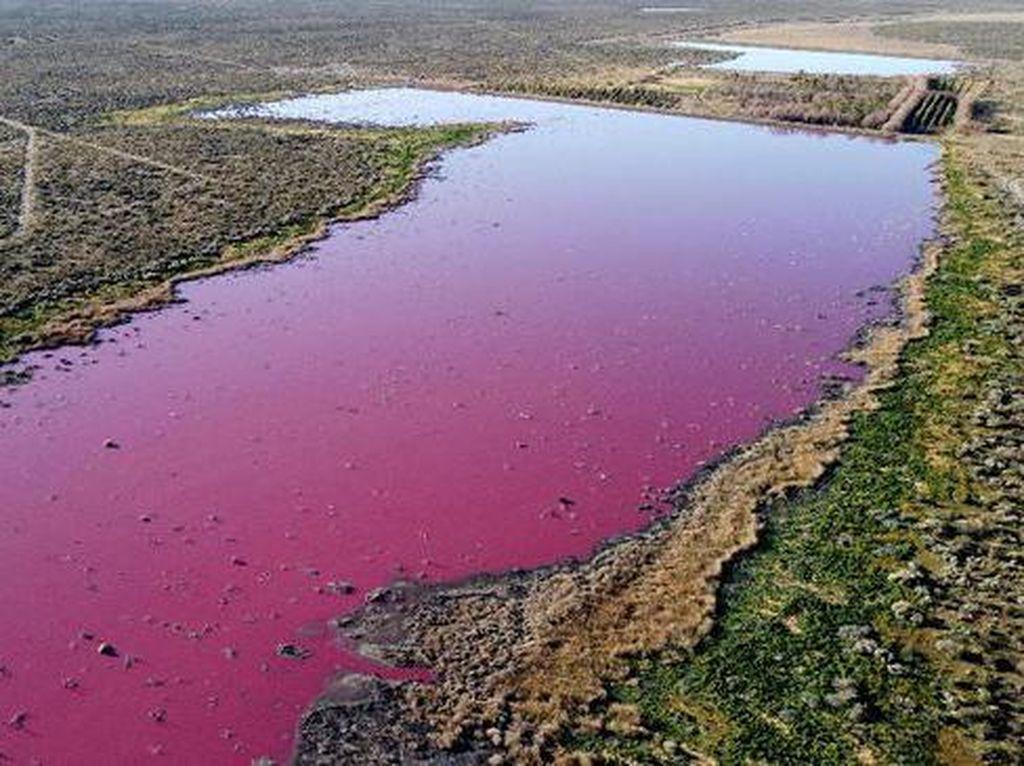 Danau Corfo Argentina yang Kini Berwarna Pink karena Limbah Pabrik