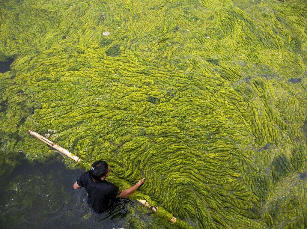 Kolam Tertua di Nepal Dibersihkan