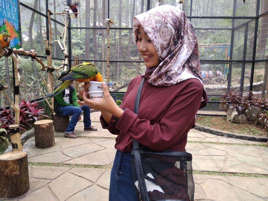 Kesulitan Uang, Pemilik Objek Wisata di Lembang Jual Burung